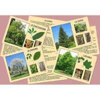 J'apprends à reconnaître les arbres